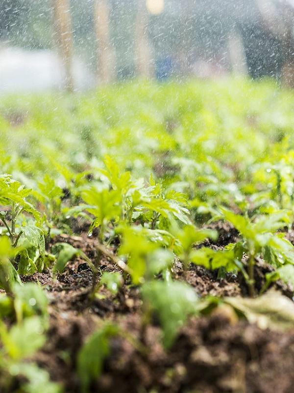 Medio Ambiente anima al sector agroalimentario a avanzar en la economía baja en carbono