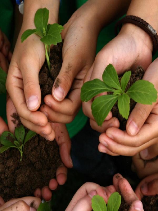 Andalucía apuesta por la educación ambiental de los universitarios