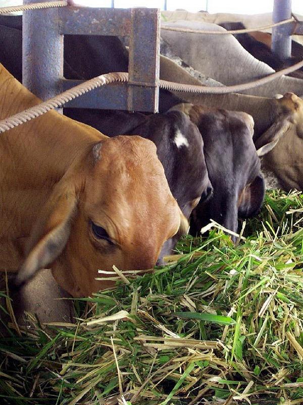 Andalucía da luz verde a un plan de urgencia por la sequía para la alimentación del ganado ecológico