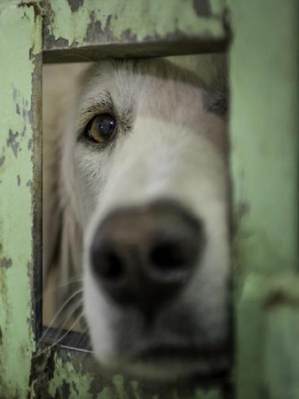 El sádico cazador y maltratador de perros de Villa del Prado intenta justificarse