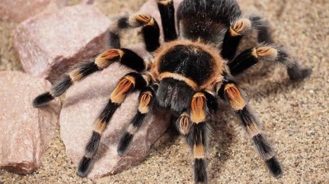 Arañas, veneno letal