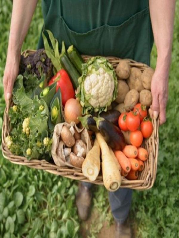 La Federación Internacional de Agricultura Ecológica se interesa por la producción andaluza