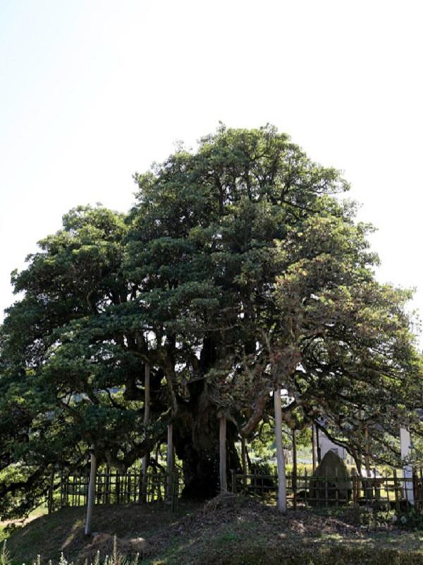 La señal del Antropoceno está en el árbol más solitario del mundo
