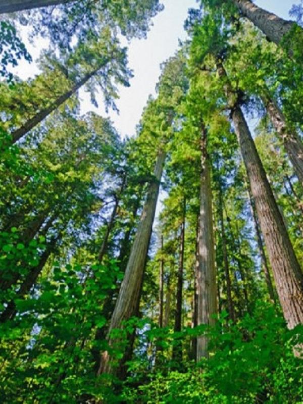 Tecnología verde láser 3D permite pesar árboles sin cortarlos