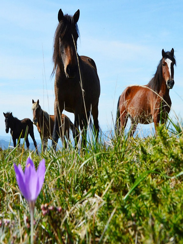 Tecnología verde para el estudio y conservación del caballo gallego de monte