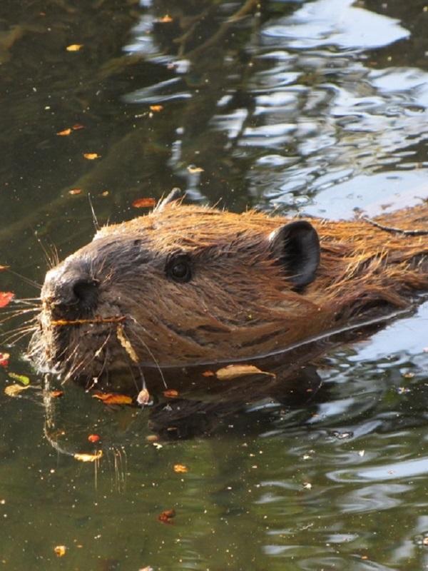 Investigadores de la UCO catalogan la fauna y la flora del entorno de Fuente Obejuna