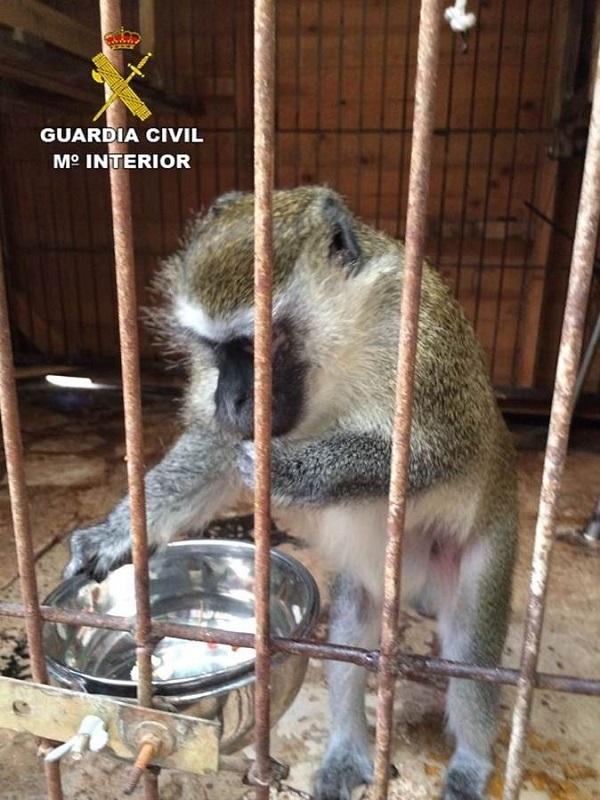 Málaga, investigan banda criminal por la venta ilegal de primates sin control sanitario