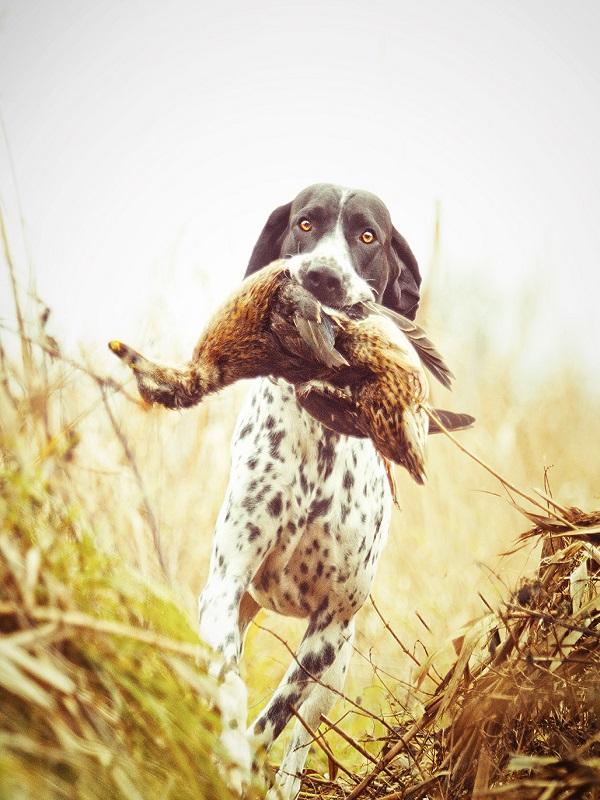 La estupidez no tiene límites, ahora quieren excluir a los perros de caza de la Ley De Bienestar Animal