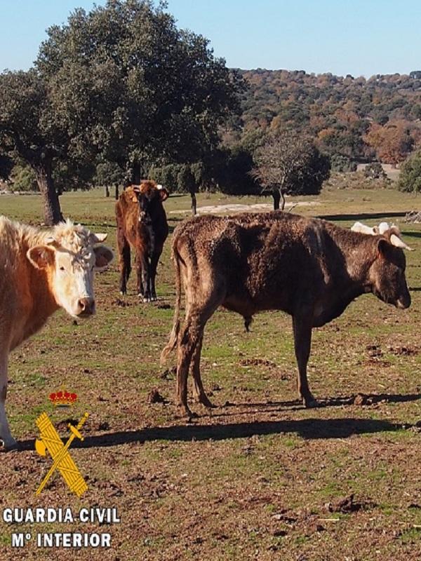 Un miserable deja morir a cinco vacas por inanición