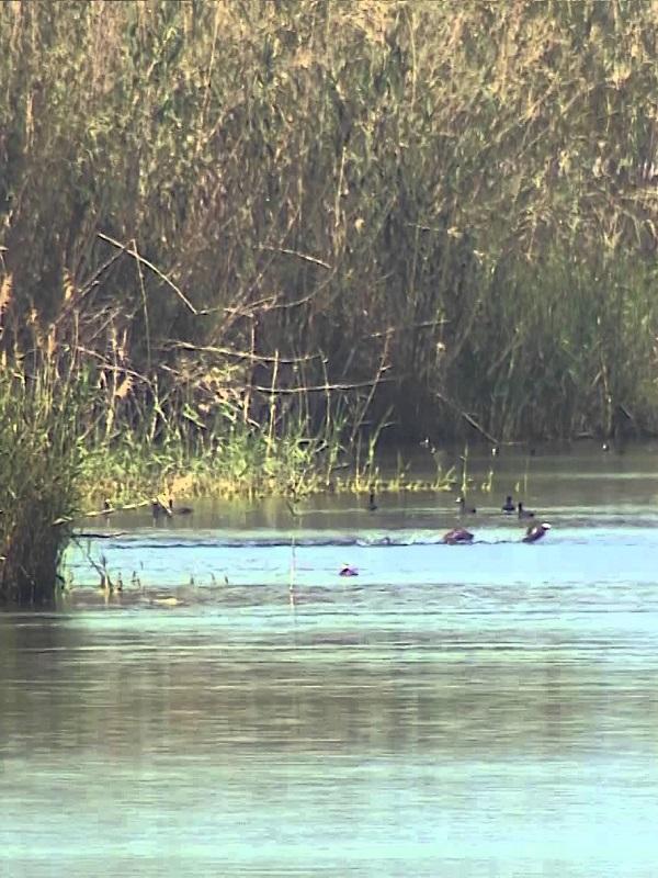 Restauran las ramblas del delta de las Albuferas de Adra