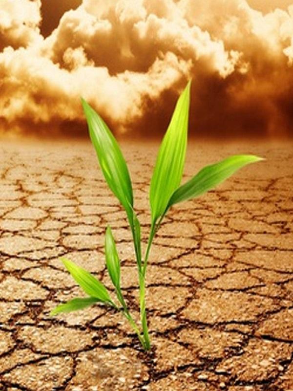 Baleares trabajará con el sector privado para optar a ayudas europeas en materia climática