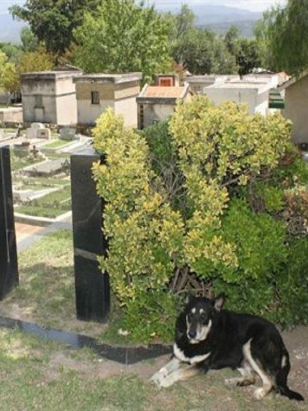 El perro cuido 10 años la tumba de su dueño