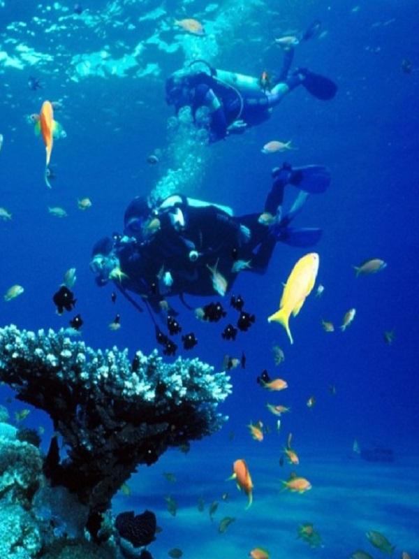 Imedea impulsa dos proyectos para monitorear actividades recreativas en reservas marinas y estimar la talla de los peces