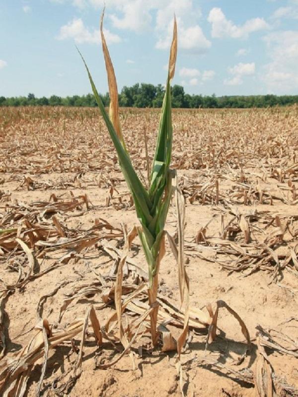 El cambio climático colapsaría las redes alimentarias, según la Universidad de Adelaida