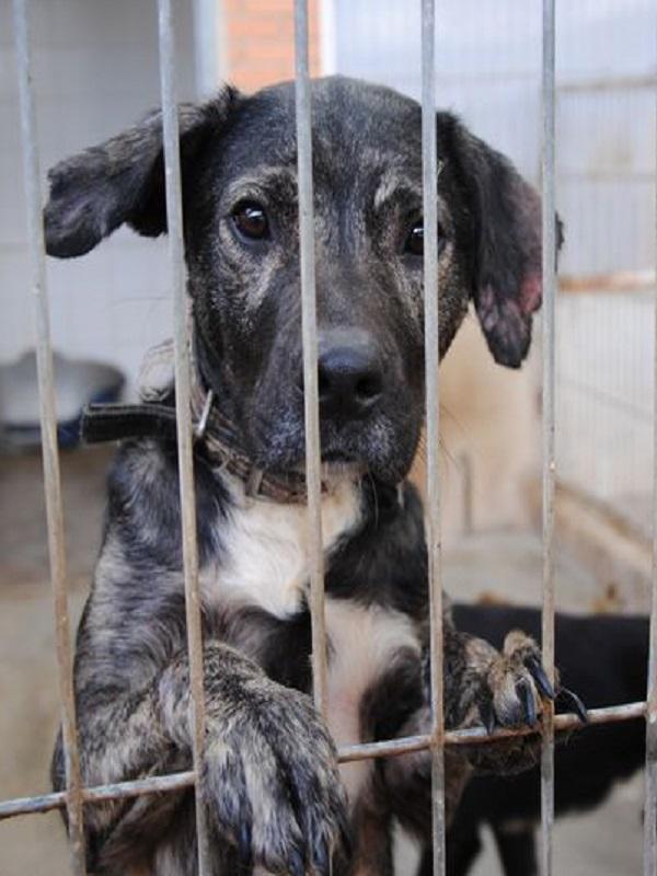 El maltrato animal subvencionado y aplaudido por la Comunidad Valenciana