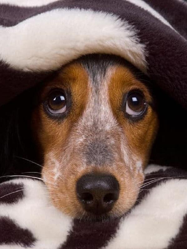 A tu mascota seguro que no le gustan los petardos, consejos practicos
