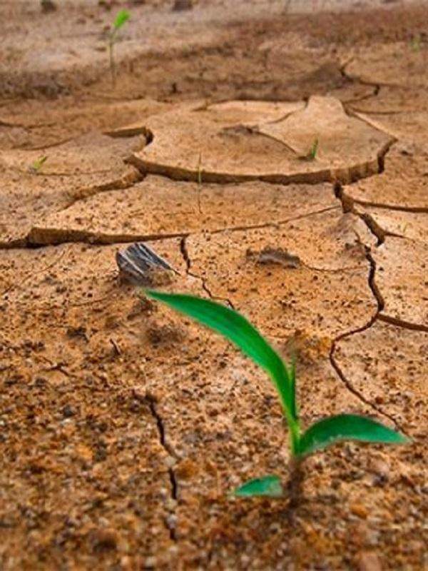 Abordan la futura Ley de Medidas Frente al Cambio Climático en Andalucía