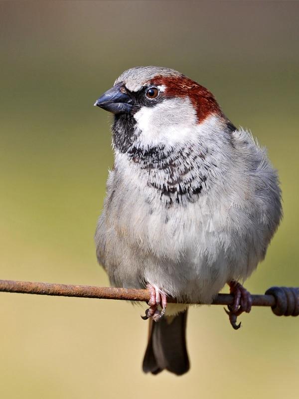 Las aves saben ARAMEO