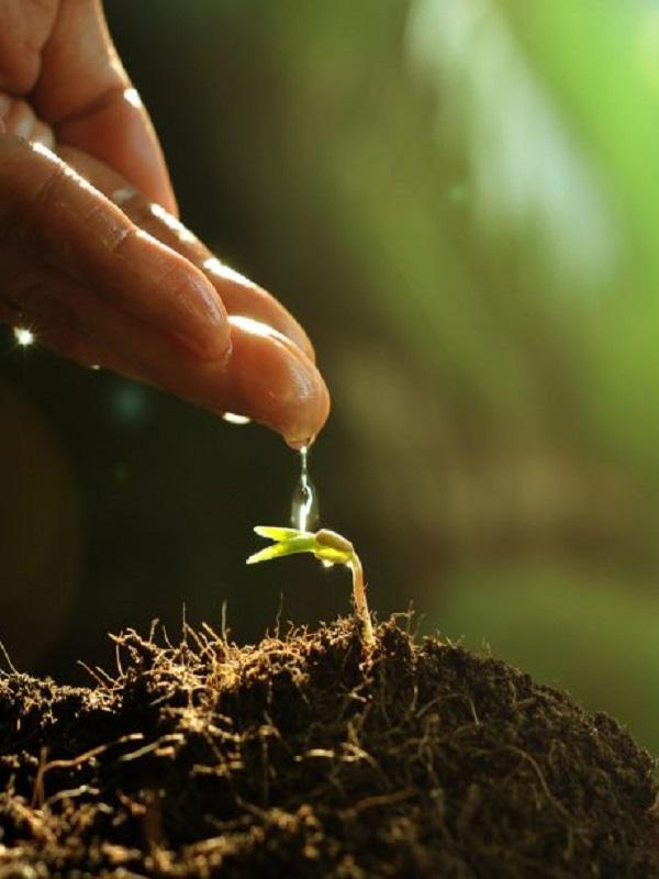 La eficiencia de la raiz impulsó la propagación global de las plantas