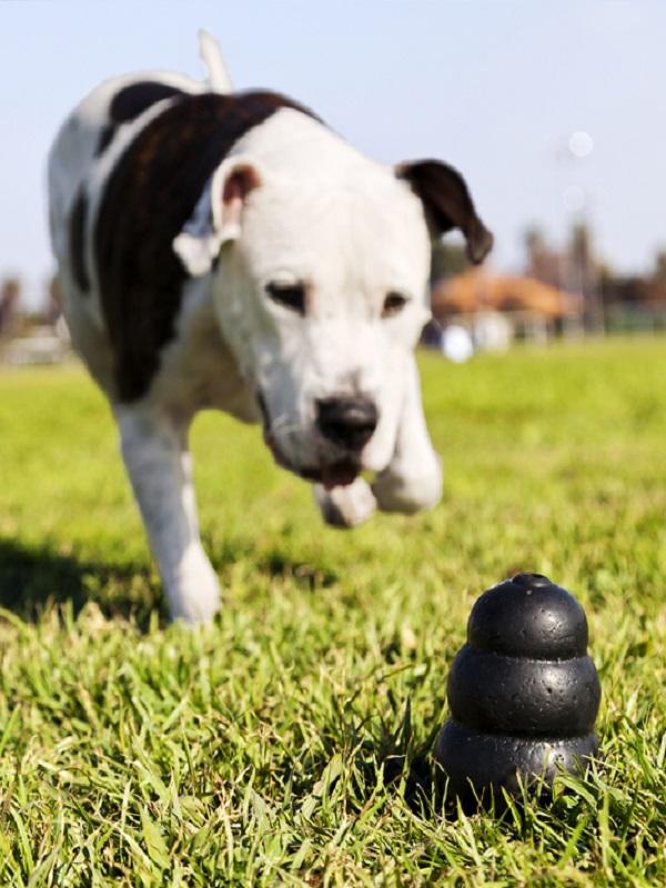 Madrid consultará públicamente la ordenanza de limpieza para identificar a perros, y sus dueños irresponsables