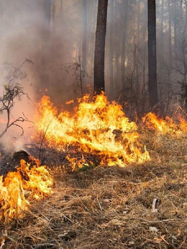 Galicia saca pecho por el hecho de que por primera vez se indemnizó a las víctimas de los incendios forestales