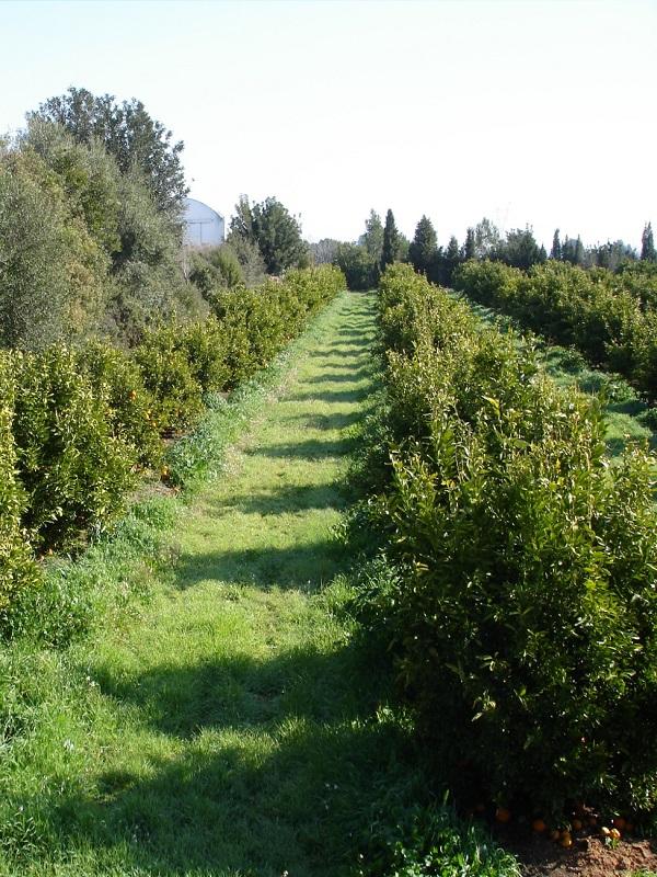 Abierto el trámite de información pública del decreto de ordenación de la producción ecológica