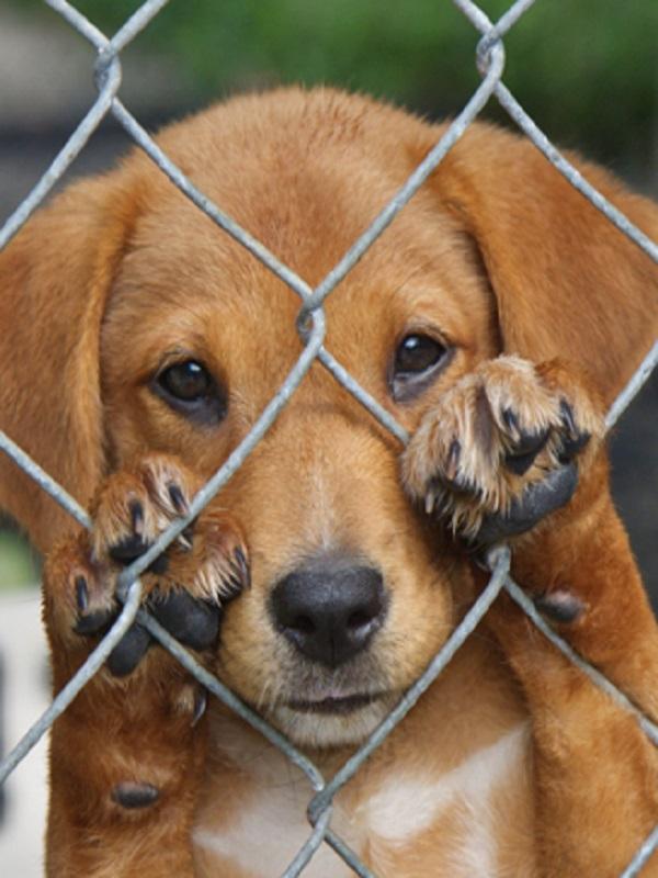 Maltrato animal a un perro herido y sin agua ni comida de un domicilio de Tàrrega (Lleida)