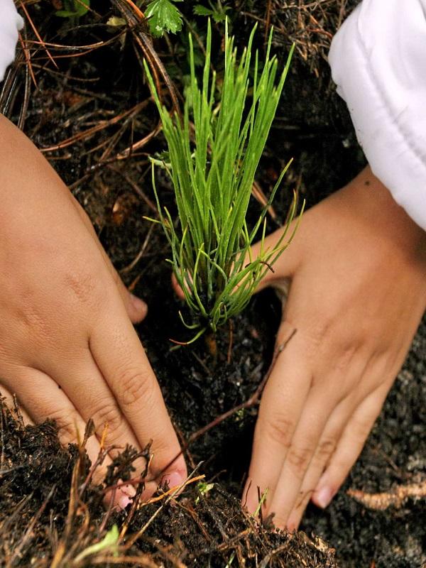 Medio Ambiente invertirá 121.000 € en un proyecto de repoblación forestal y mantenimiento de bosques de La Rioja Baja