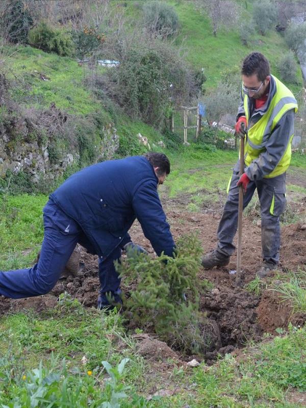 Andalucía planta 11.000 árboles en la desembocadura del río Aguas