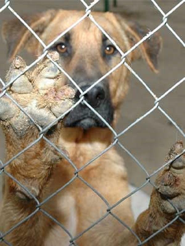 Detienen a un sujeto por maltratar animales en Gran Canaria