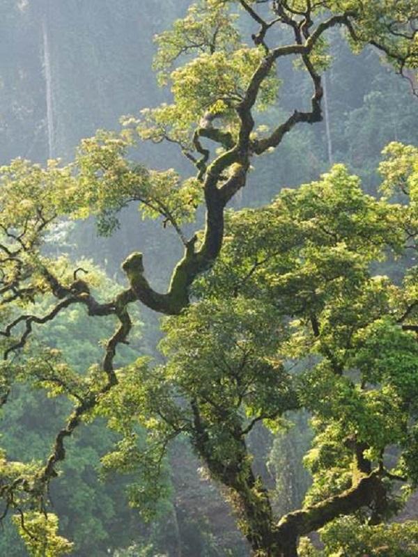Los bosques tropicales sucumben a la mano del hombre
