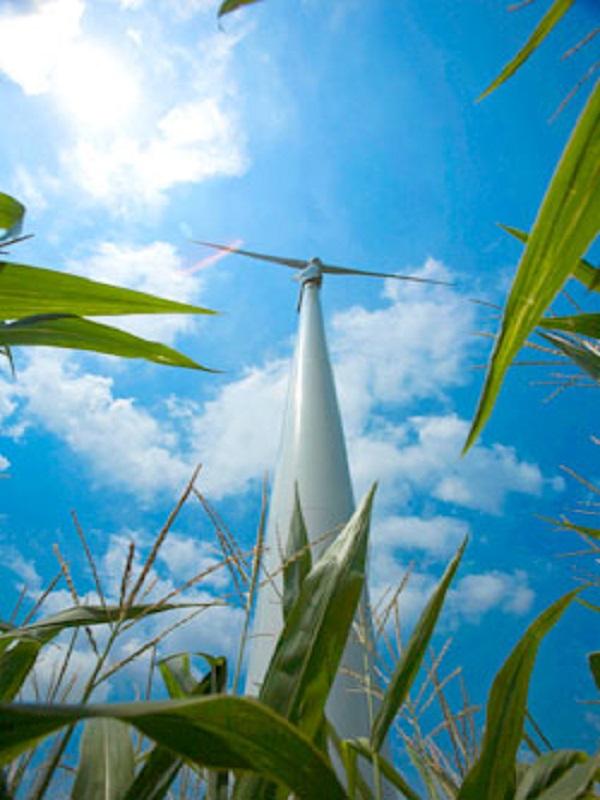 Acciona construirá casi 1.000 nuevos MW de renovables este año