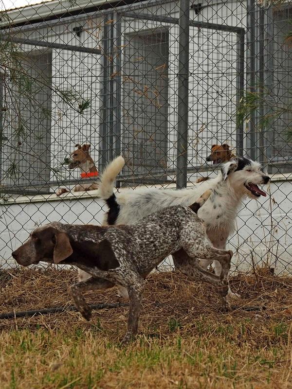 El Refugio Provincial de Animales de Huelva obtiene la certificación de su Sistema de Gestión Ambiental