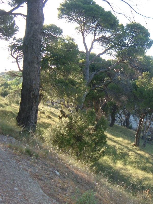 Una nueva ruta turística entre El Pinar de Cánava y Los Caracoles en Jimena (Jaén) fomenta el ocio al aire libre