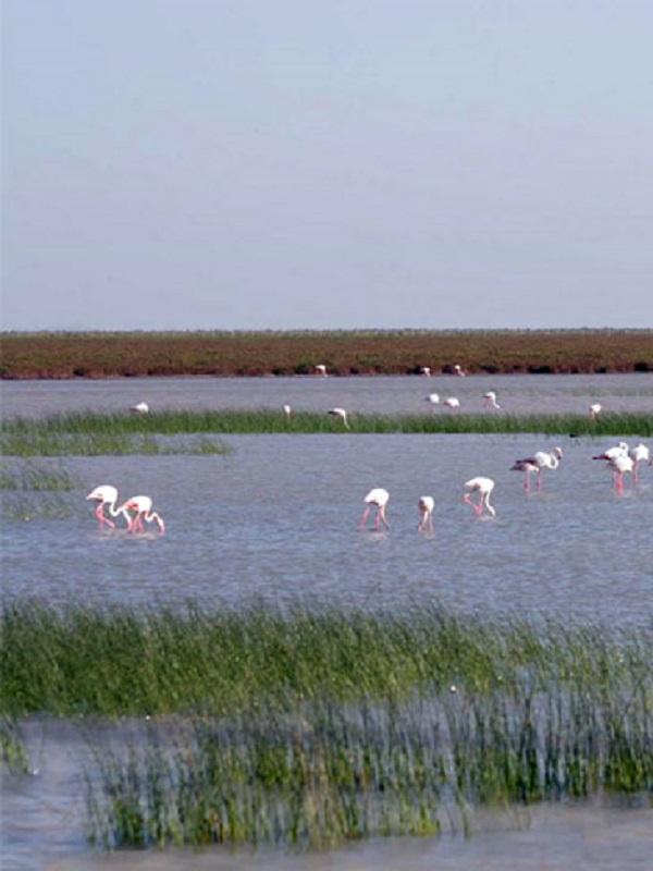Los Parques Nacionales gozan de buena salud pero hay que atajar los problemas del agua en Doñana y Daimiel