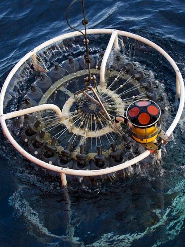 Los microorganismos del fondo del mar proceden del oceáno superficial