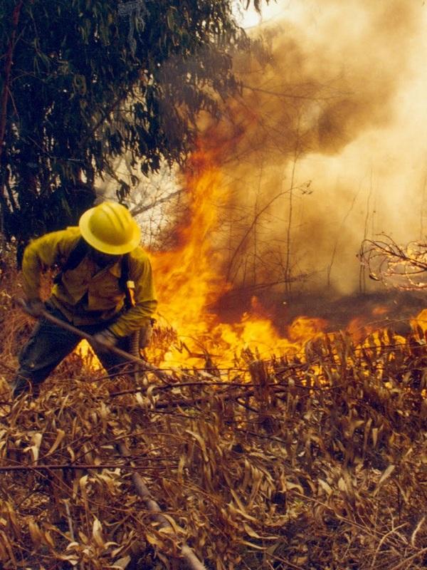 Cada año nos gastamos 1.000 millones en apagar fuegos forestales