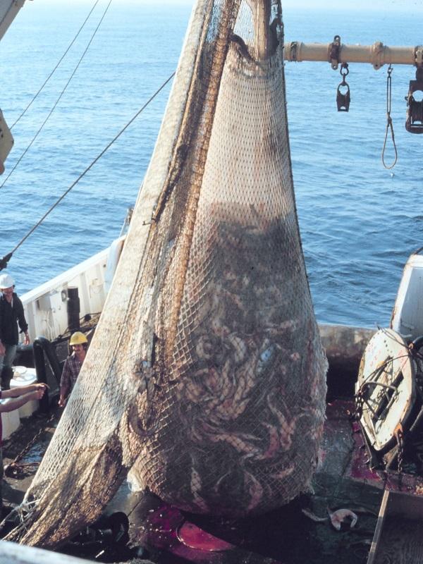 La ONU alerta de que el Mediterráneo es el mar con más sobrepesca del mundo