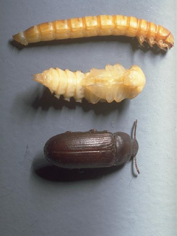¿Por qué los insectos pueden dar esquinazo a la congelación?
