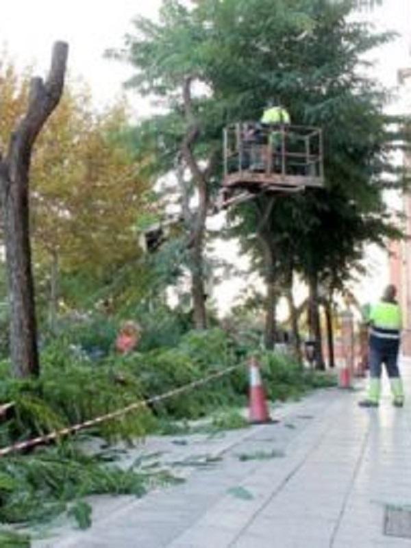 Sevilla realiza un tala salvaje y masiva