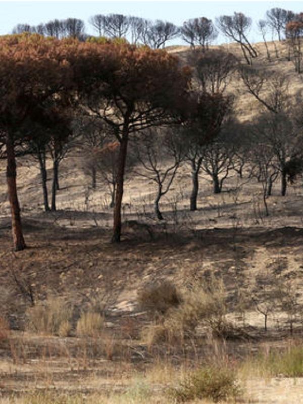 Nuevos proyectos para recuperar zonas de los incendios de Las Peñuelas y La Granada en Huelva