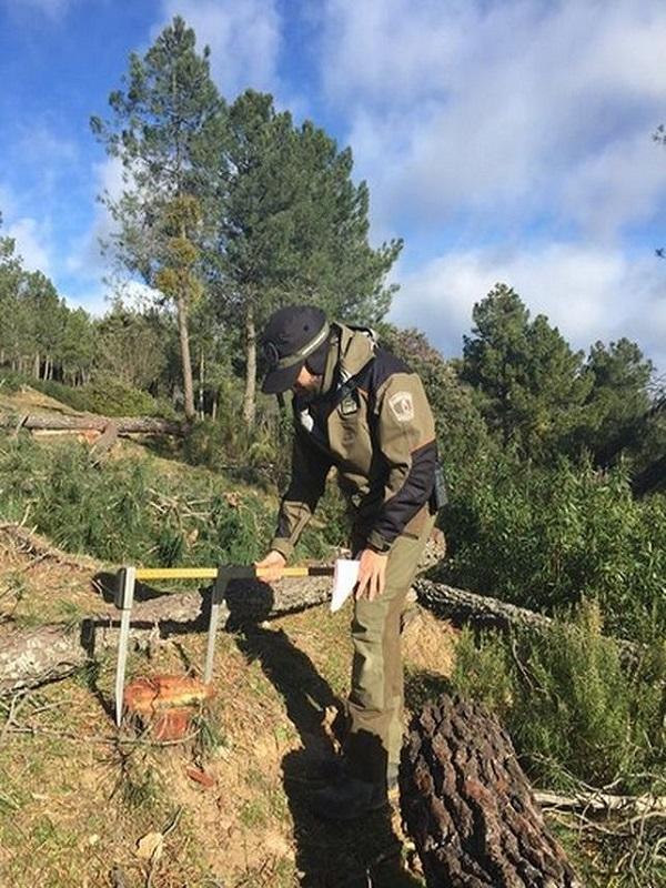 CCOO de Agentes Forestales plantan a la Comunidad de Madrid