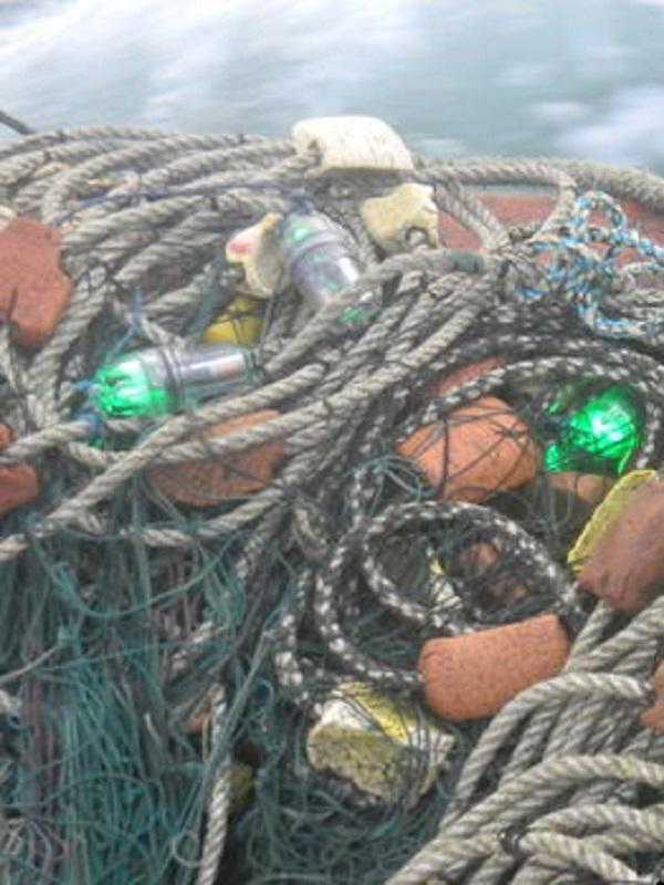 Las luces LED evitan la muerte de aves marinas por redes de pesca
