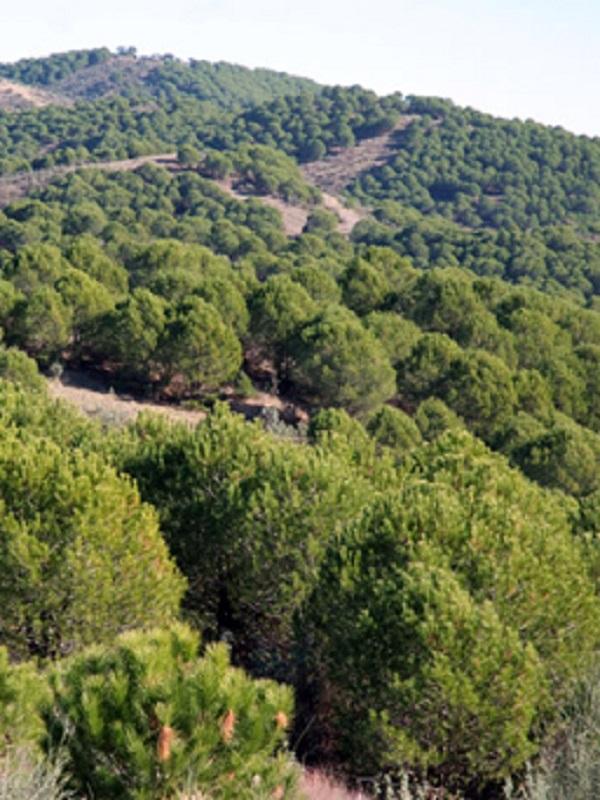 II Plan de Desarrollo Sostenible del Parque Natural de la Sierra de Cardeña y Montoro