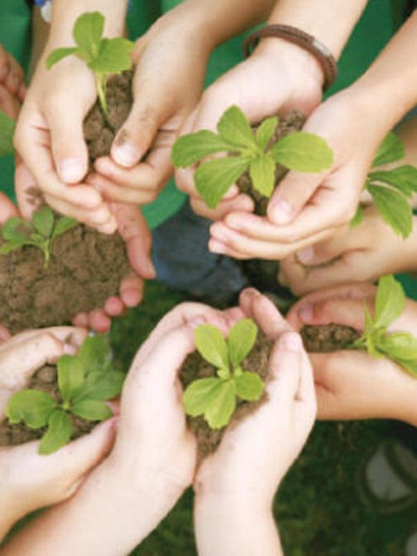 La formación ambiental, prioridad en la escuela