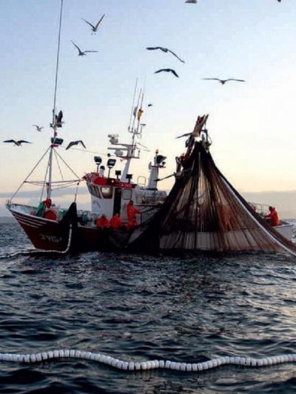 Oceana revela docenas de casos de pesca ilegal en áreas protegidas del Mediterráneo