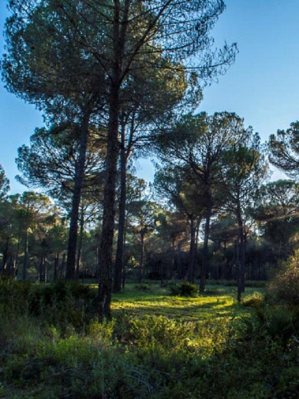 Teide y Doñana son los espacios naturales más amenazados de España