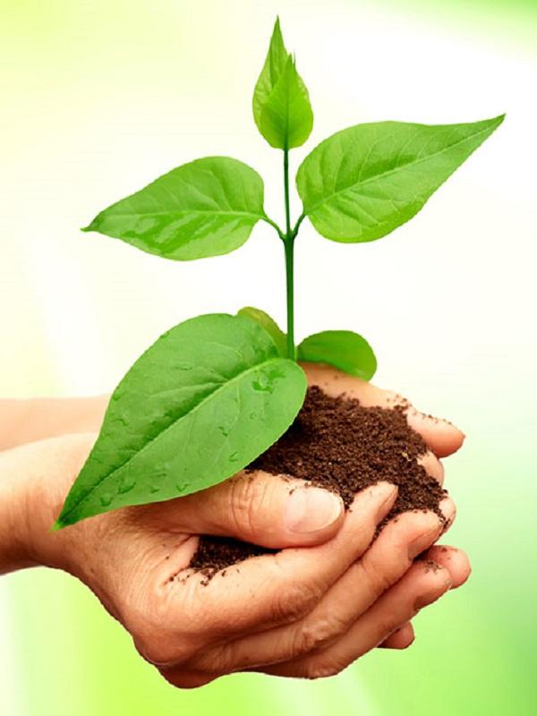 Por una formación ambiental y ambientalizada