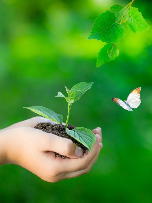 EOI: una oportunidad formativa ambiental para una sociedad más sensibilizada