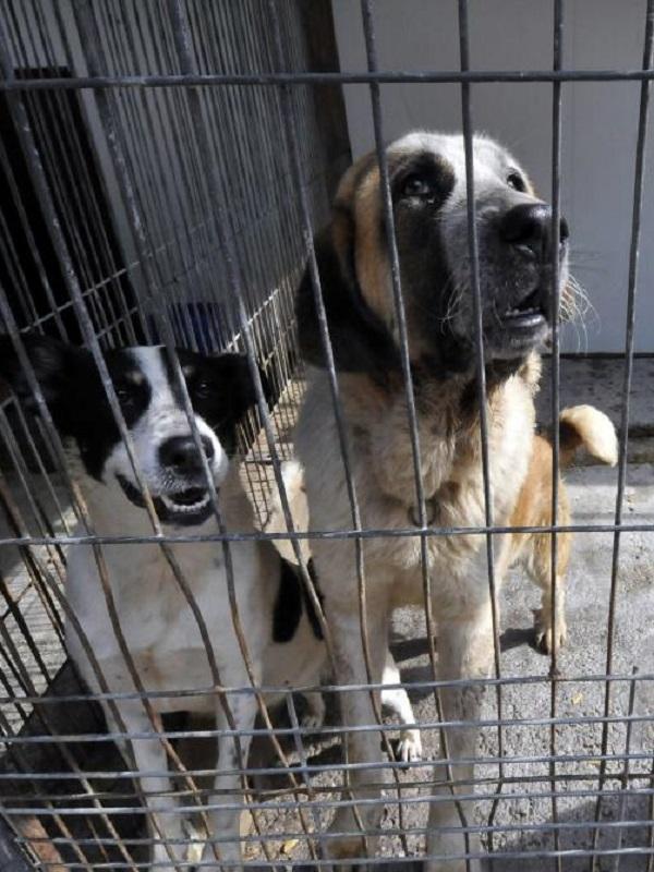 Incautan casi 200 perros en malas condiciones de un centro de cría y venta en Madrid que no tenía permiso